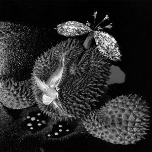 Shiga Nobuko | Harmony Garden | 2001 | Java Creative Cafe